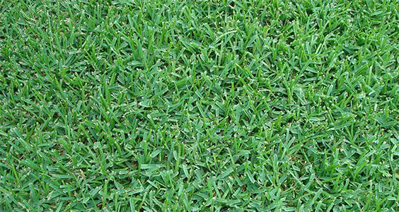 Sod and Grass for sale in Central Florida